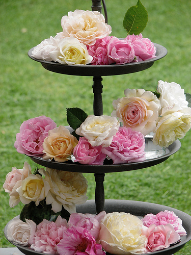 Roses love tea